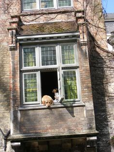 My pic from Brugge, Belgium.  These dogs are always at the window...even shot in movies.
