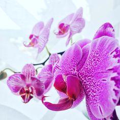 7 mentions J'aime, 2 commentaires - une Fleur Parmi les Fleurs (@unefleurparmilesfleurs) sur Instagram