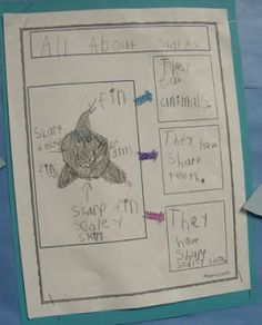 """All About ______"" writing.  Need to make the template. This was done in a Primary class after an explorative unit on sharks."