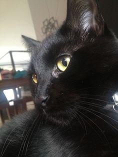Black Cat; Maks