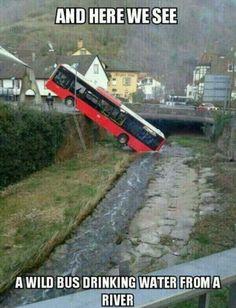 A Wild Bus