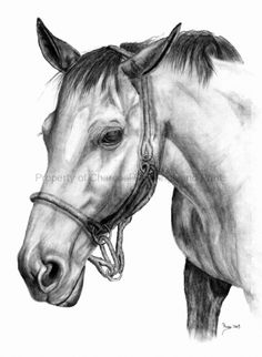 Image detail for -Charcoal Drawings of Pets and Animals | Drawings Charcoals and Pastels