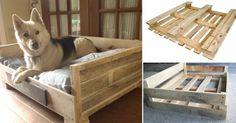 Una confortable y bonita cama para tu mejor amigo que puedes hacer tú mismo.