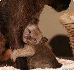 Kitten Holding Mom