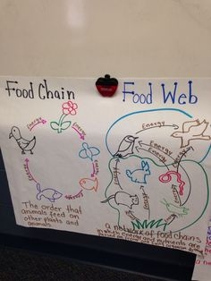 This is a great food chain anchor chart that could easily be food web and food chains sciox Choice Image