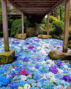 Amabiki Kannon, Ibaraki, Japan, Travel, Tourist Attraction, Sightseeing Spots, Superb Views, Temple, Summer, Flower, Hydrangea, 雨引観音, 茨城, 日本, あじさい, 絶景 #Japan #travel #guide #japantravel #TheRealJapan #Japanese #howtotravel  #vacation #trip #explore #adventure #traveltips www.therealjapan.com Hortensia Hydrangea, Hydrangea Care, Blossom Garden, Blossom Flower, Beautiful Places In Japan, Aesthetic Japan, Flowers Nature, Stunning View, Landscape Design