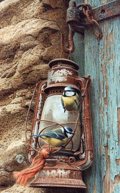 *COPYRIGHT - All rights reserved ( please leave artist info intact) Limited edition prints by Andrew Hutchinson - Andrew Hutchinson - wildlife artist Decoupage, Old Lanterns, Still Life Art, Wildlife Art, Bird Art, Belle Photo, Beautiful Birds, Painting Inspiration, Painting & Drawing