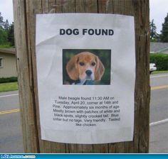 Dog found, tasted like chicken