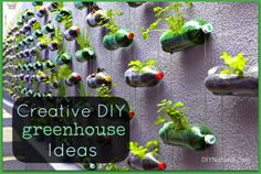 Bottle Greenhouse and Other Creative DIY Greenhouse Ideas – Making a bottle greenhouse is easy - turn it on its side, cut a hole in it, add soil, and plant your plants. Learn this and other creative greenhouse ideas!