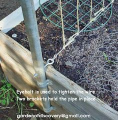 Easy metal trellis for beans and peas