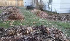 6 Ways to Use Fallen Leaves in Your Garden (from Evelyn Hadden, author of Beautiful No-Mow Yards)