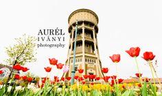 IVÁNYI AURÉL photography: Víztorony, tulipánokkal