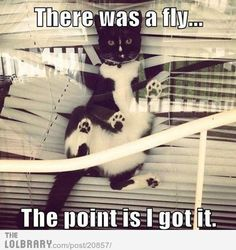 There was a fly....
