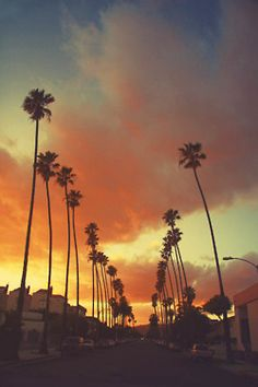 Palm trees in Los Angeles, California Oh The Places You'll Go, Places To Travel, Places To Visit, Venice Beach, Beautiful World, Beautiful Places, Beautiful Sunset, San Diego, City Of Angels