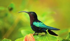 Undeveloped Dominica is a haven for hummingbirds and other wildlife ©️️ gydyt0jas ©️️ Getty Images