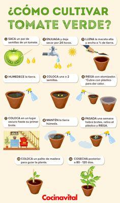 We're rooting for these 12 clever plant hacks! Eco Garden, Home Vegetable Garden, Fruit Garden, Green Garden, Edible Garden, Garden Plants, Organic Gardening, Gardening Tips, Plantas Indoor