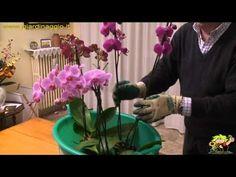 coltivazione delle orchidee - YouTube