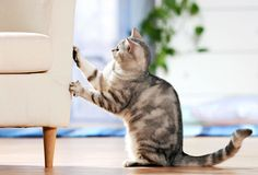 How to Train a Cat Not To Scratch Furniture #stepbystep