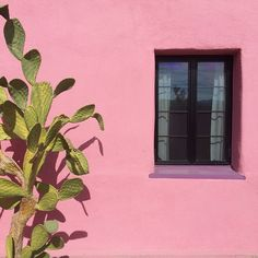 Love the pink wall.