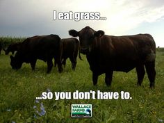 I eat grass...so you don't have to.