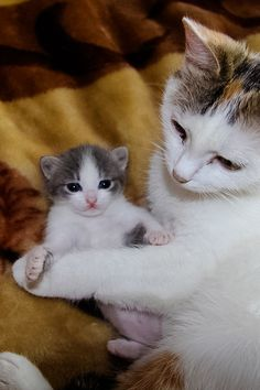Beautiful mother and baby kitten!