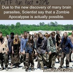 WTF Fun Fact #2096: Due to the discovery of many brain parasites, scientists say that a zombie apocalypse is actually possible....yikes here come the walkers