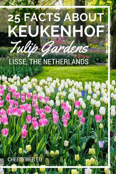 25 Facts about Keukenhof Gardens and Tulips, in the Netherlands