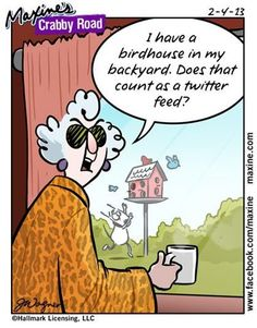 """I have a birdhouse in my backyard. Does that count as a twitter feed?"" #yankinaustralia #twitter #socialmedia"