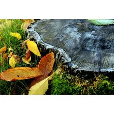 "Discovered by Grace, ""Tree stump and falling leaves."" at Mount Pleasant, Vancouver, British Columbia"