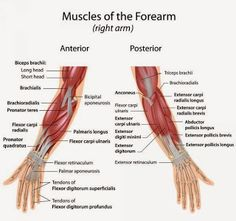 Posterior leg muscles by melisa | fitness | Pinterest | Muscles ...