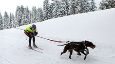 Skijoring - or using a dog to pull you on skis - is as fun as workouts get for your and your canine companion.