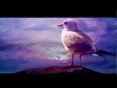 OMAR AKRAM - Surrender / Free as a Bird - YouTube