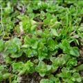 Common Georgia wild plants