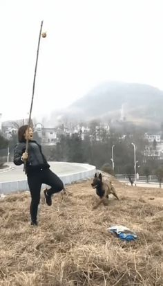 Belgian Shepherd Doing an Awesome Jump Funny Animal Pictures, Cute Funny Animals, Best Funny Pictures, Silly Dogs, Funny Dogs, I Love Dogs, Cute Dogs, Belgian Malinois Dog, Belgium Malinois
