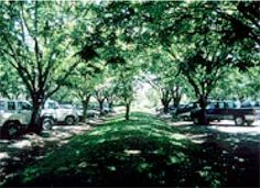 photo of shading in a parking lot median