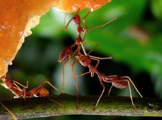 Ant's World