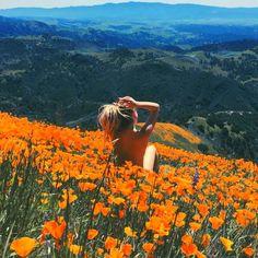 California poppy's