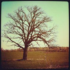 Lone tree in a field - @clearverve2- #webstagram