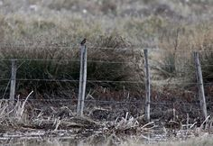 Que voyez-vous ? Des arbres couchés, une clôture, de l'eau au creux d'un fossé. Il y a aussi un Martin-pêcheur, sur...