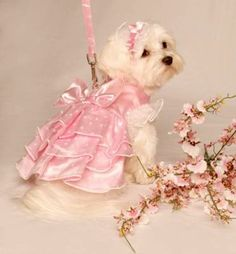 Google Image Result for http://pets-live.com/wp-content/uploads/2011/05/Pink-Heart-Garden-Party-Dress-Set-w-Headpiece-and-Leash.jpg