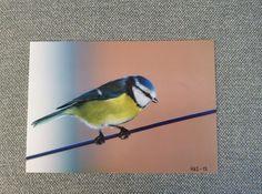 Foto 20x30 Birds, Animals, Animales, Animaux, Animal, Animais
