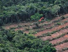 Caption: Palm oil comes first  News: Commercial agriculture causes 70 percent of tropical deforestation--over half of this is illegal, NewScientist reported.  Image: BAY ISMOYO/AFP/Getty Images