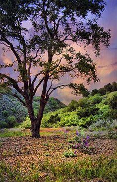 ~~Ojai   the pink moment, Ojai, California by h_roach~~