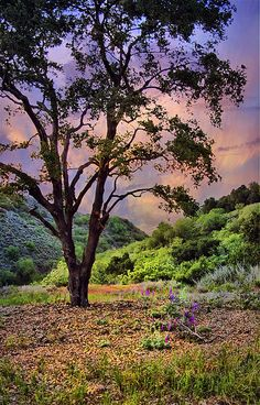 ~~Ojai | the pink moment, Ojai, California by h_roach~~