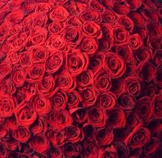Red roses!  Red roses!