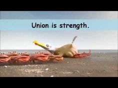 The Power of Union is Strength Crabs VS Ants VS Penguins Advertisement. Rippln Vision - YouTube