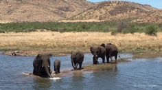 Martin Heigan was staying at the Pilanesberg National Park, South Africa. He was on his way back to his accommodation when he spotted elephants taking a dip Elephants Playing, See You, South Africa, Dip, National Parks, Campaign, Environment, Take That, Good Things