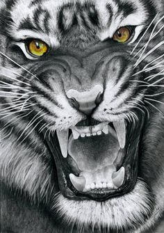 how to draw a roaring tiger - Google Search
