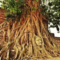 Eu sempre quis ver esse lugar de perto e hoje realizei esse sonho! Mais um item riscado da lista. ֹ ֹ Meu dia foi muuuuito quente, mas valeu o esforço! Visitei a cidade de Ayutthaya - que é Patrimônio Mundial da UNESCO. A cidade é repleta de templos e eu visitei vários ??? #Ayutthaya #thailand #UmViajanteAsia2015 #tailandia