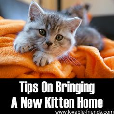 Please Share This Page: Tips On Bringing A New Kitten Home – Image To Repin / ShareImage – © sushaaa – Fotolia.com You are planning to adopt a kitten – but are you really prepared? Cats are wonderful and loving companions at home, but upon their arrival, you cannot just expect them to move into …